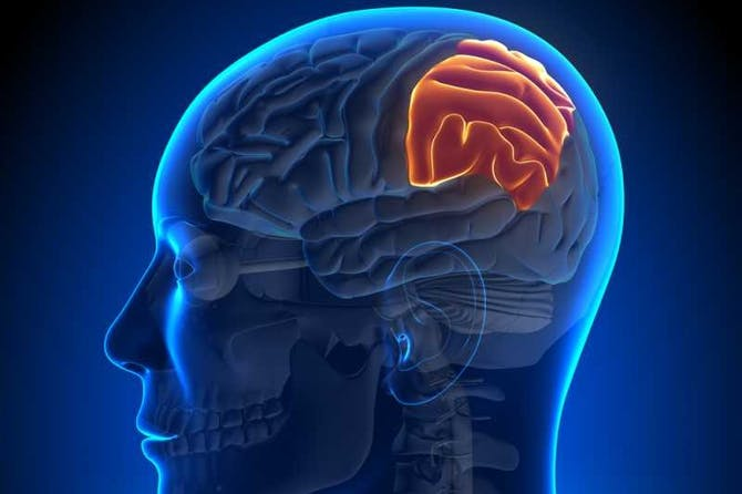 ed3b2a767 أورام الدماغ- أعراض، أسباب، المضاعفات والعلاج - طب تايم